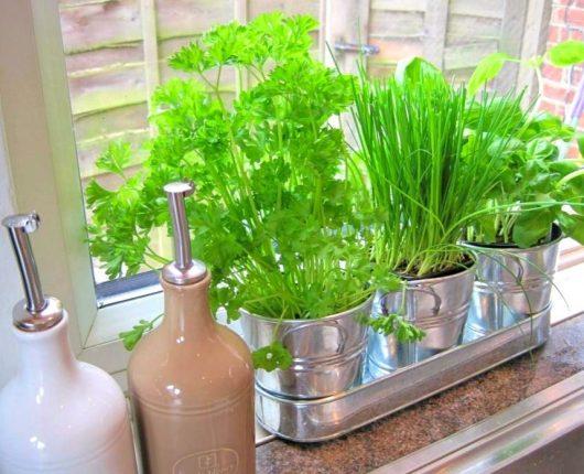 Desafio da Nutri: aprenda a usar sua horta