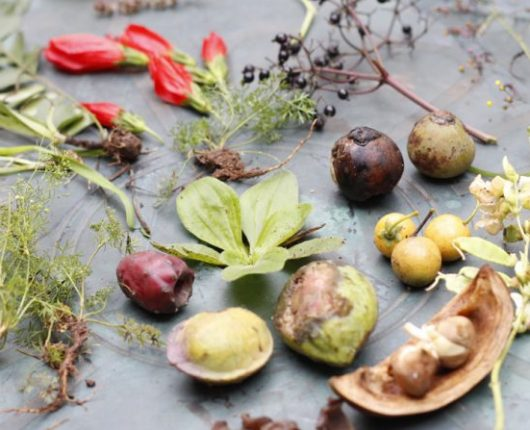 Dicas da Nutri: o que são PANCs e por que você deveria consumi-las?